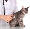 Ветеринарные клиники в Ромнах